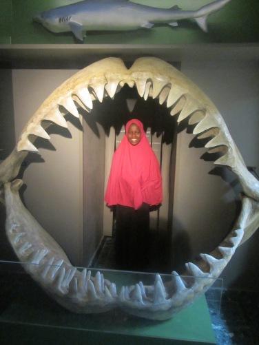 Somaliska Freds på Malmö museer 2015